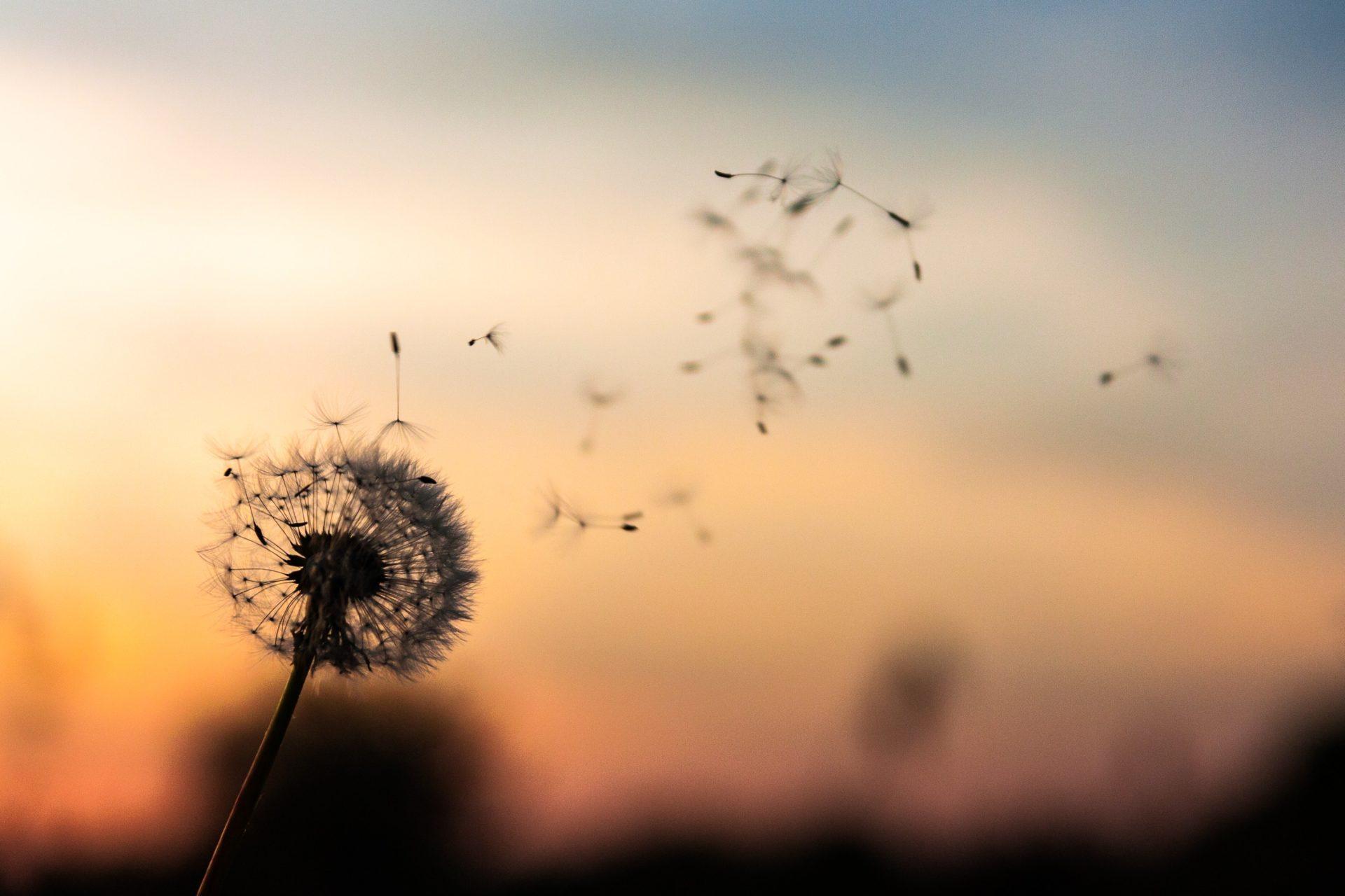 Fenomén Mindfulness: Jak prožít naplno každý moment